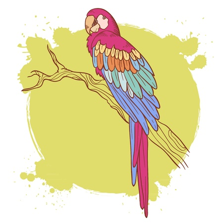 parrot tail: Colorful hand drawn ara parrot sitting on a tree brunch isolated on a grunge background Illustration