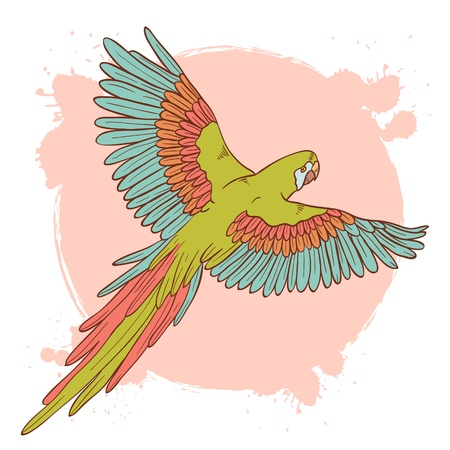 exotic pet: Colorful hand drawn ara parrot flying isolated on a grunge background Illustration