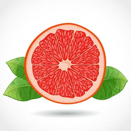 grapefruit juice: Fresh ripe piece of grapefruit vector illustration isolated on white