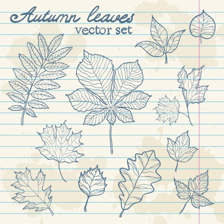 birch leaf: Autumn leaves colorful collection set
