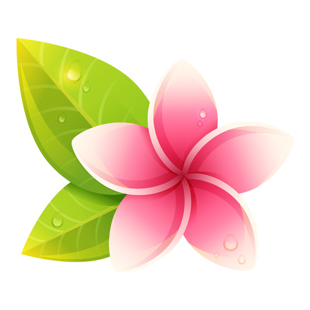 pink plumeria: Peaceful and relaxing card with spa exotic flowers isolated Illustration