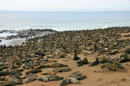 Cape Cross Seal Reserve in Namibia