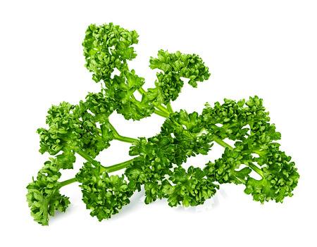 garnishing: green curly parsley isolated