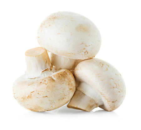 mushrooms champignons isolated