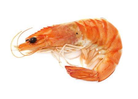 tiger white: Boiled shrimp isolated on white background;