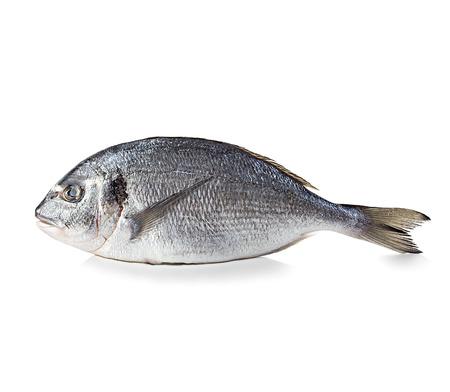 dorado fish: Dorado fish isolated on white background.