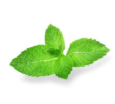 hierba buena: hojas de menta aisladas sobre fondo blanco Foto de archivo