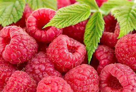 Ripe raspberries with leaves close-up Banque d'images