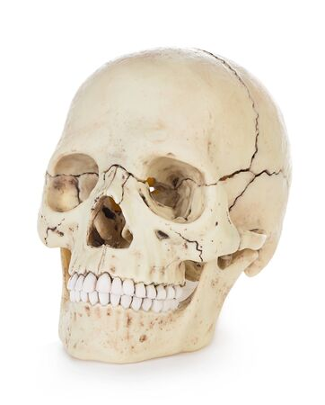 Human skull isolated on white