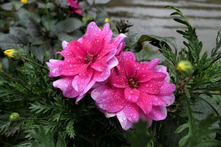 Pink Flowers and Raindrops Stock Photo