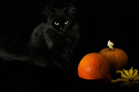 black cat on a black background with bright pumpkins