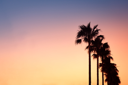Tall Palm Trees at Sunset on the Mediterranean Island of Majorca at Sunset With Copy Space