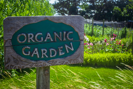 Carved Wooden Sign in an Organic Garden With Plants in the Background