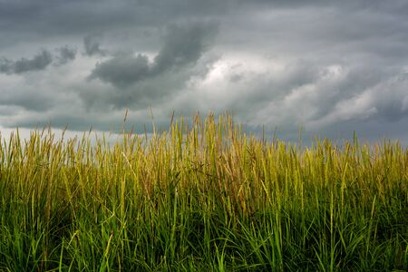 Closeup of Grassland With Storm Clouds in the Background