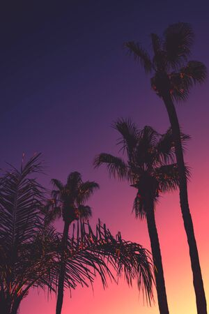 Tropical Vacation Background With Palm Trees and Copy Space