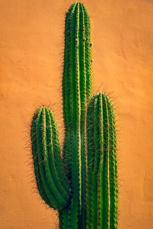 Background Image of A Tall Cactus In Front of a Terracotta Colored Wall Stock fotó