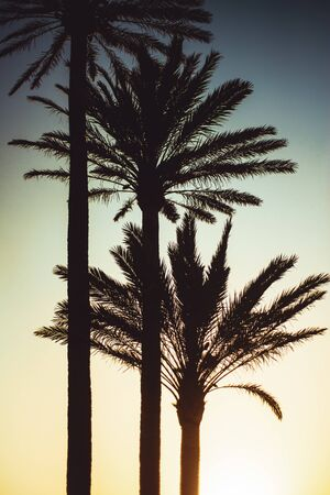 Background Image of Tall Palm Trees Silhoutted Against the Sun