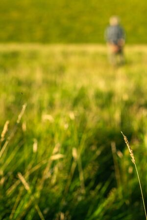 Elderly Man Walking in a Field With Focus on Grass in the Foreground With Copy Space Stock fotó