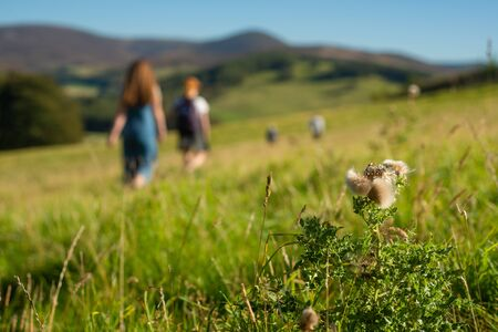 Family Walking in Nature on a Sunny Day in the Scottish Borders With Focus on a Thistle in the Foreground