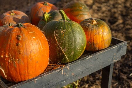 Vibrant Pumpkins For Sale at a Farm Stand in October Stock fotó