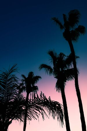 Palm Trees at Sunset Tropical Background With Copy Space for Text