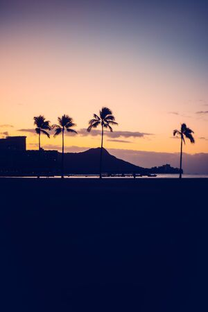 Hawaii Sunrise Background with Diamond Head and Palm Trees with Copy Space