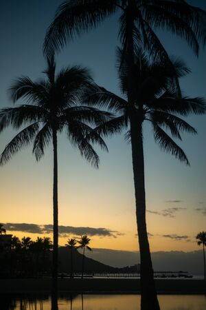 Palm Trees at Sunrise  on a Beach in Waikiki Hawaii With Diamond Head in the Background