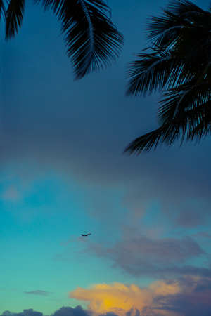 An Airplane Flies in the Sky Above Hawaii at Sunset With Tropical Palm Trees in the Foreground