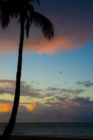 Palm Tree on the Beach in Hawaii at Sunset with an Airplane in the Sky Over the Ocean in the Distance