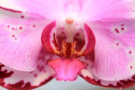 blomming: Flowers Stock Photo
