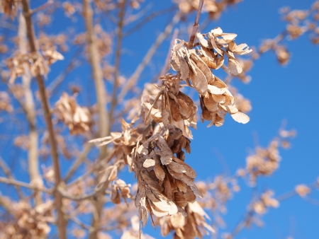 wizen: branch with dry leaves Stock Photo
