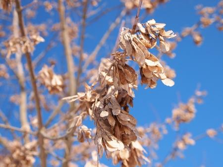 sapless: ramo con foglie secche Archivio Fotografico