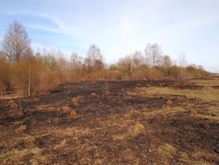 scorched grass at the edge of the forest
