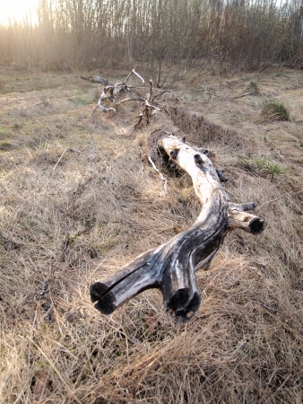 dead tree in a forest glade