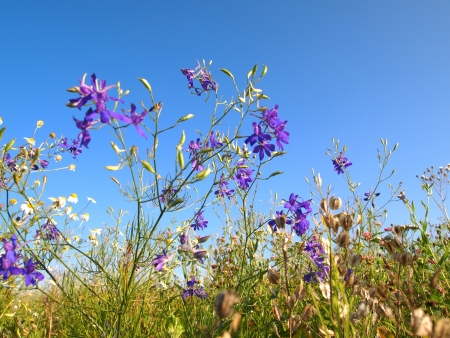wild flowers on the background of sky