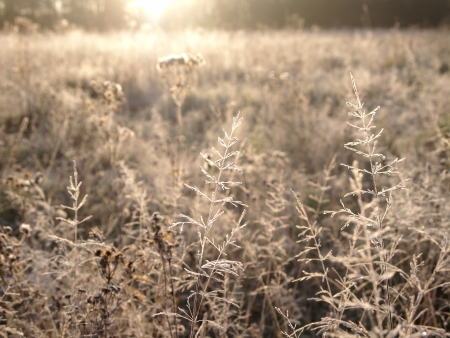 frosty grass in the sunshine