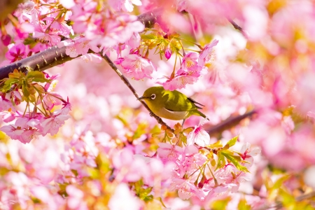 Spring in Japan Stock Photo - 14227706