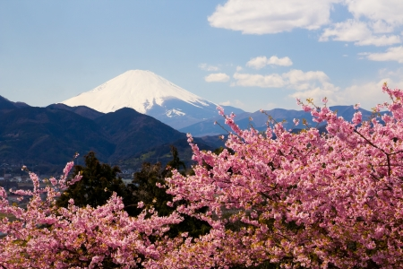 Mt Fuji and 1872  Kawazu-zakura Stock Photo - 14257685