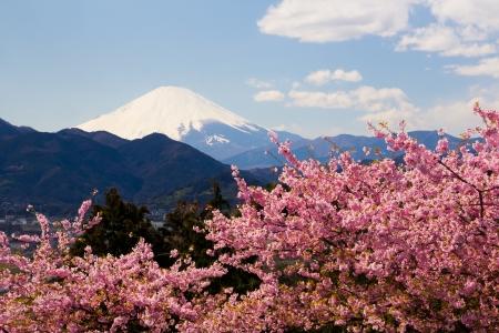 early blossoms: Mt Fuji and 1872  Kawazu-zakura