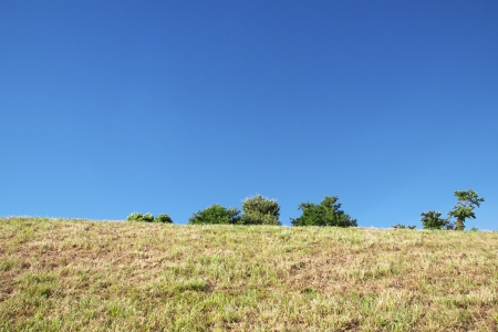 The grassland and tree with clear blue sky photo