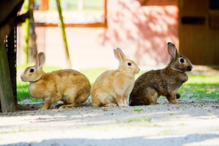 Three little rabbit matey