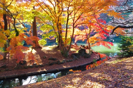 aceraceae: The Foliage and pond
