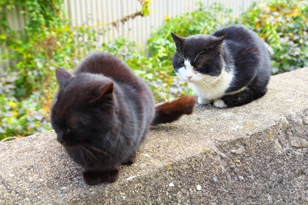 feral: The two feral cats Stock Photo