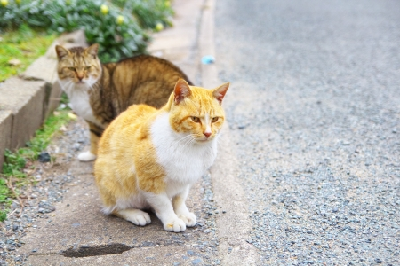 cat island: The two feral cats Stock Photo