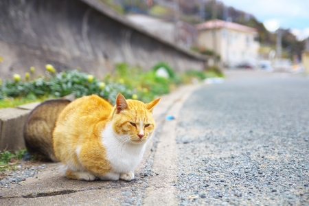 cat island: The feral cats