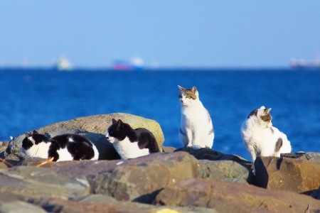 bevy: Feral cats on the background of sea