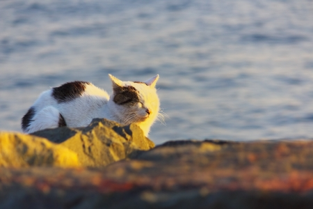 feral: Feral cat bathing in sunset Stock Photo