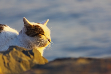 Feral cat bathing in sunset photo