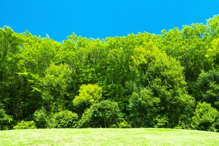 verdure: Fresh verdure with blue sky