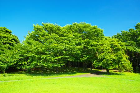 verdure: Fresh verdure with blue sky